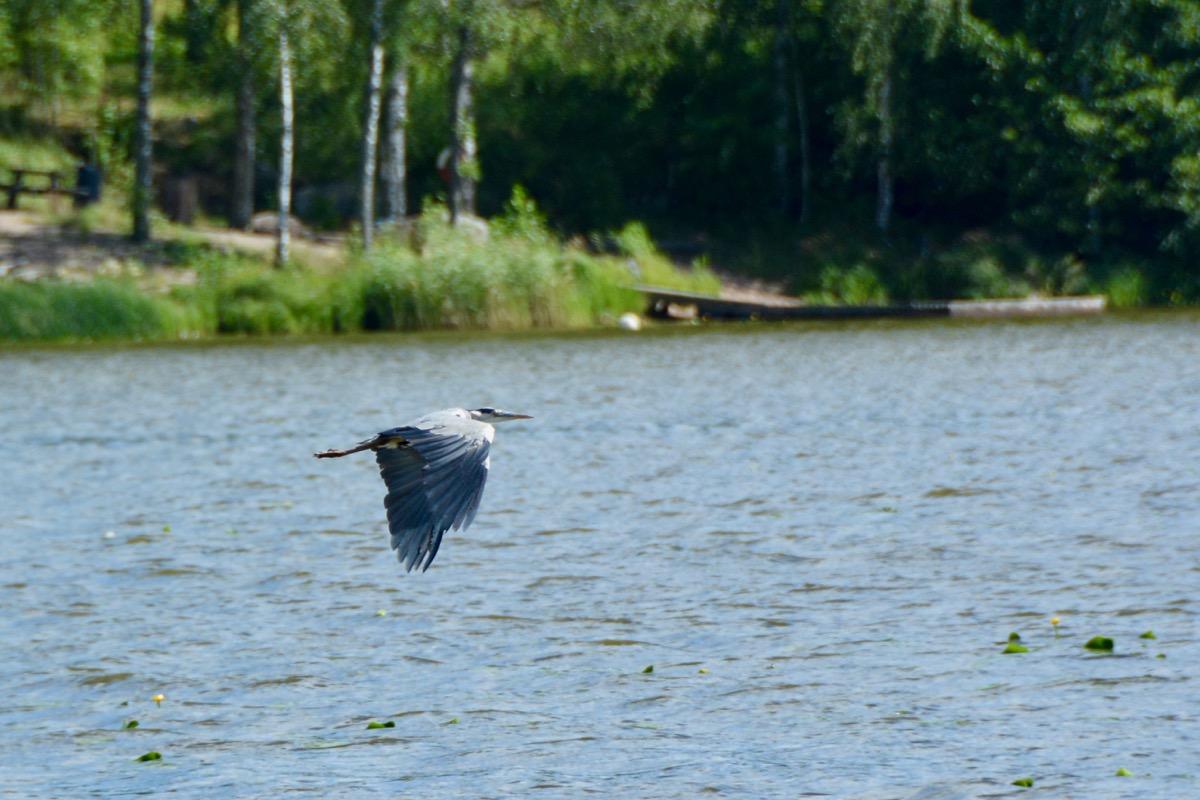 Fågelskådning Annandag Påsk 17 April Kl. 07.00